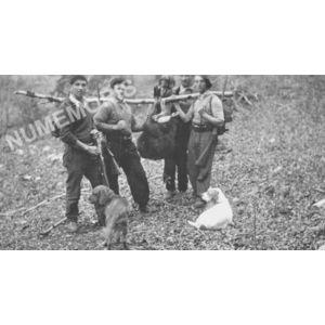 Pommiers la Placette : chasse au chamois