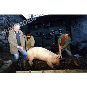 Pommiers la Placette : l'abattage du cochon en 1986