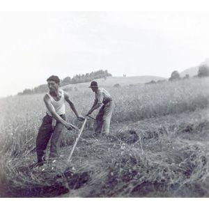 Pommiers la Placette : les foins en 1946