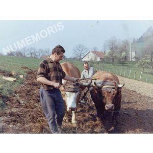 Pommiers la Placette : labours