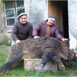 Pommiers la Placette : trophée de chasse en 1960