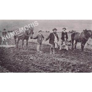 la Bâtie-Divisin : labour avec un cheval