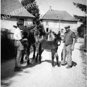 le Pin : un âne et son petit