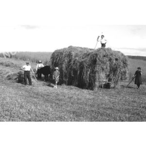 Chirens : char de foin en 1947