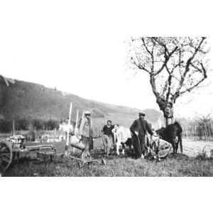 Chirens : planter les patates vers 1945 dans les vignes