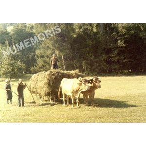 Voiron attelage de foins à l'Agnelas en 1960