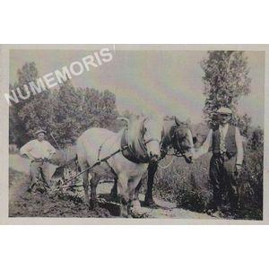 la Bâtie-Divisin : labour avec des chevaux