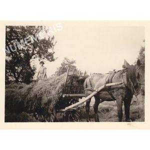 Voissant : char de foin en 1959