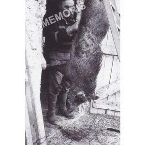 Bilieu : Joseph Micoud et un sanglier