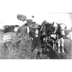 Bilieu : les foins avant 1914