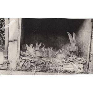 Montferrat : lapins de clapier en 1975