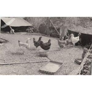 Montferrat : basse-cour en 1975