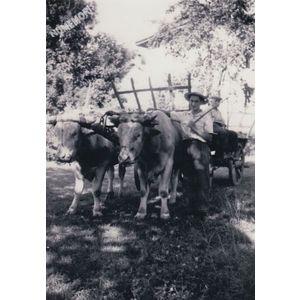 Chirens : char de boeufs à Bavonne