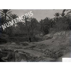 Palmiers2 en  Afrique du Nord