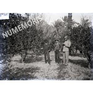 Personnages dans un champs de palmiers en  Afrique du Nord