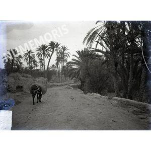 route entourée de palmiers en  Afrique du Nord