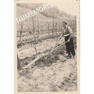 pp voissant vigne labours nd RMV