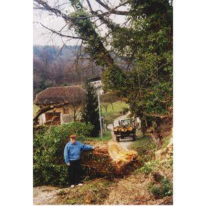 PP abattage arbre 3 1992 MJLR