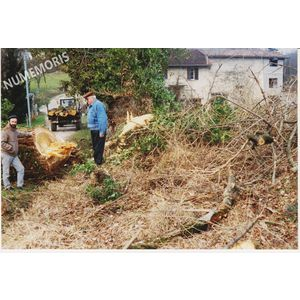 PP abattage arbre 2 1992 MJLR